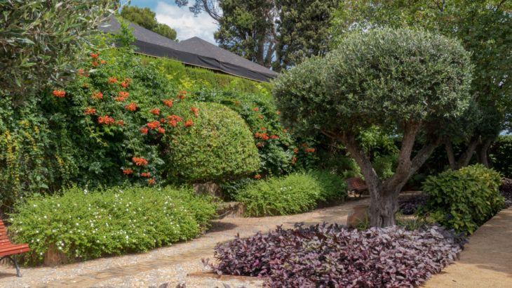 Olivenbaum Kaufen Mediterraner Garten Garten Botanischer Garten