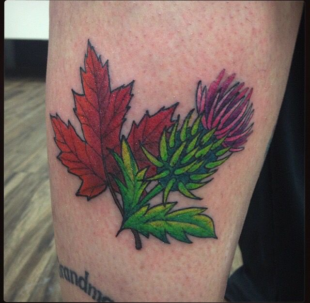canada and scotland small tattoo design scottish thistle and maple leaf tattoo on le edmonton. Black Bedroom Furniture Sets. Home Design Ideas