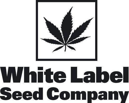 White label forex company