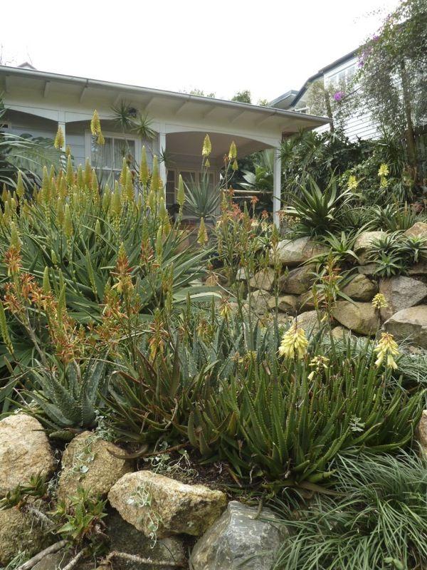 Aloe Aloe at Taringa House | GardenDrum | Australian ...