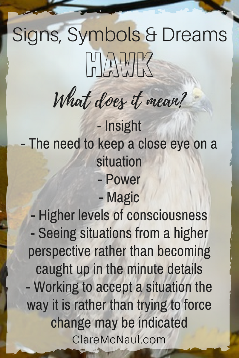 When Hawk Comes You Can Expect A Lot Of Spiritual Symbolism And