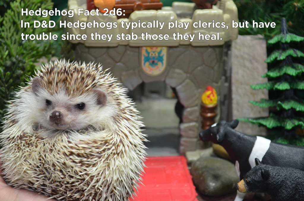 70720258c A fact for the nerds. | Hedgehog | Hedgehog facts, Hedgehog ...