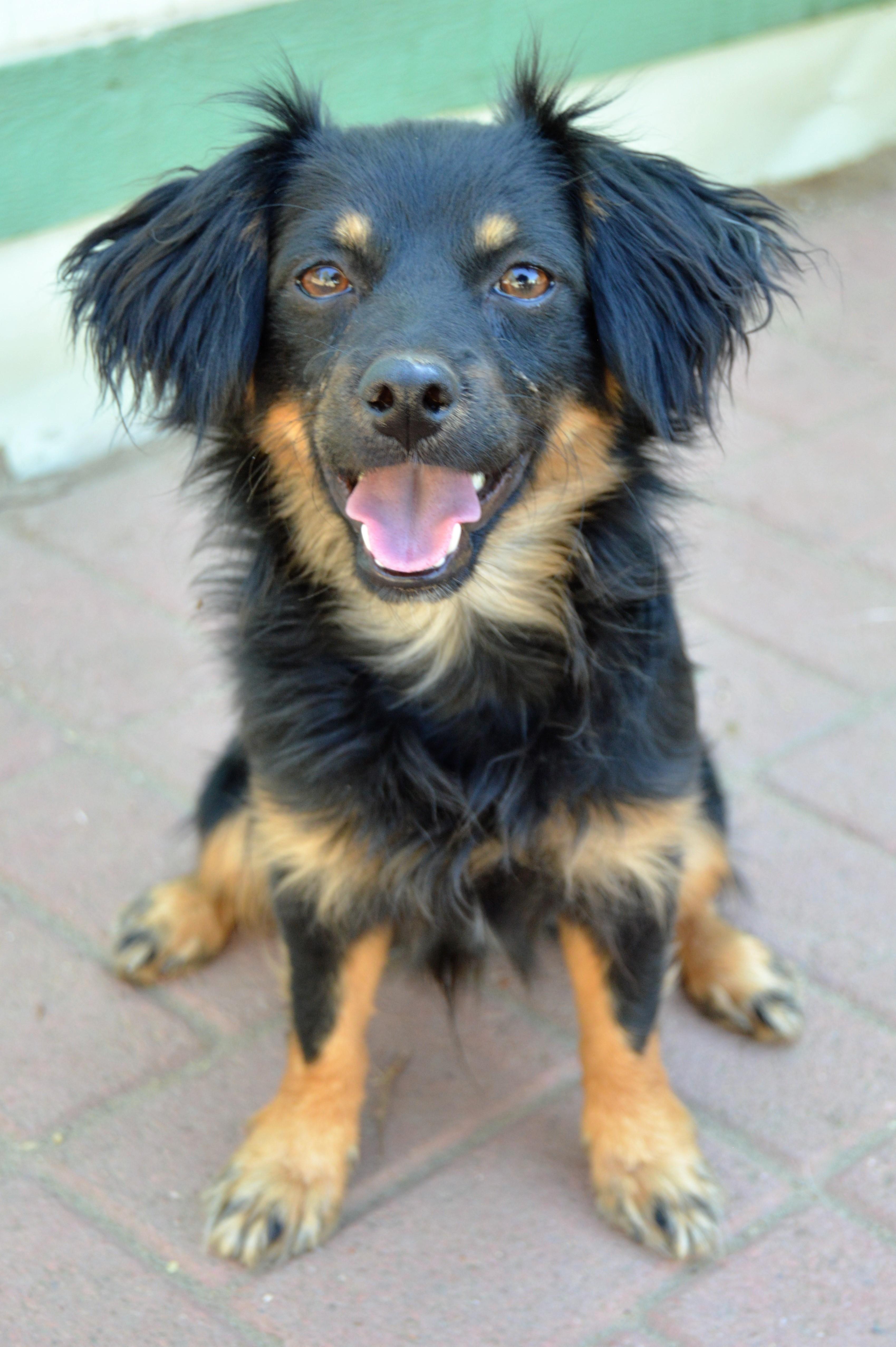 Adopt SKIPPY on Terrier mix dogs, Dog adoption, Animals