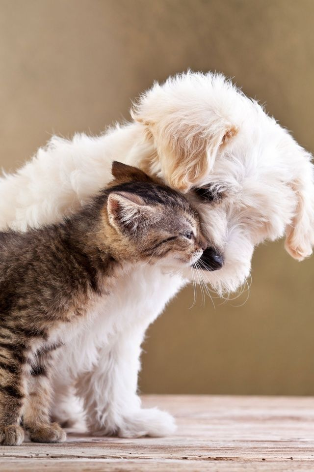 Welcome To My Perfect World Animals Cats Dogs Pals Pinterest