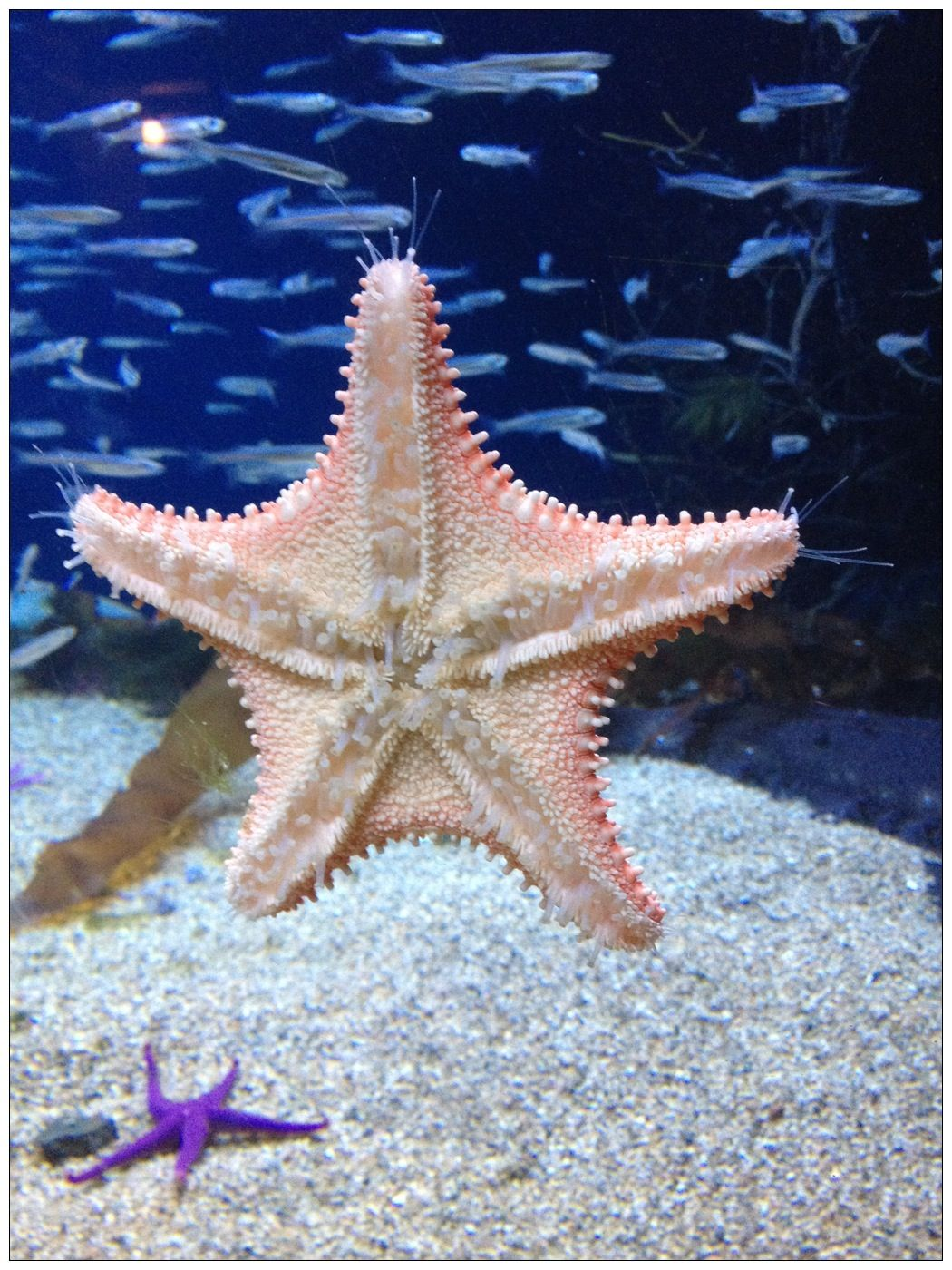 I took this pic at the New England Aquarium yesterday and it turned out great :)!
