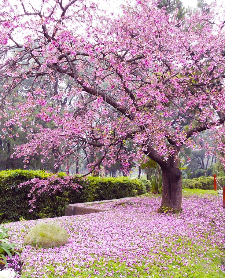 Japanese Garden, Buenos Aires Argentina Photo By Fe