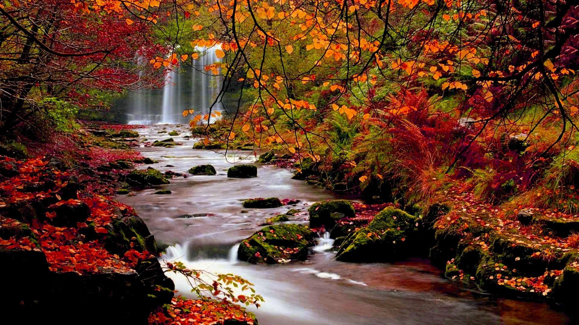 Free Fall Autumn Leaves Wallpaper For Desktop Jpeg 1920 1080 Lanskap Pemandangan Air Terjun