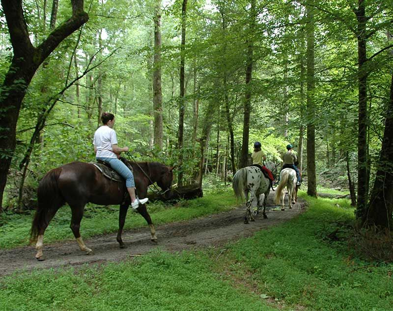 Cades Cove Riding Stables Riding Stables Cades Cove Pigeon Forge Tennessee Vacation