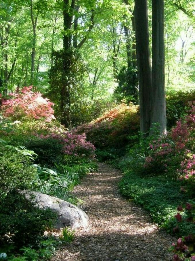 Photo of This path is so intimate to me, I just love it.