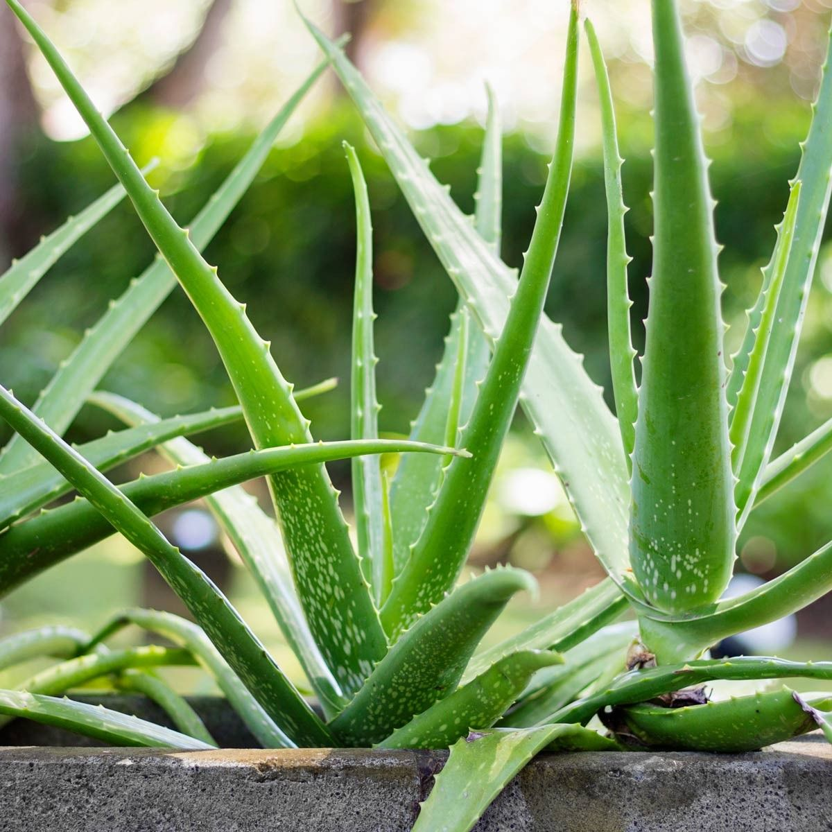 10 Plants That Are Toxic For Your Pet... Http://flip.it