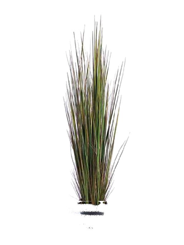Cutout plant grass cutout pinterest textur pflanzen for Vegetacion ornamental