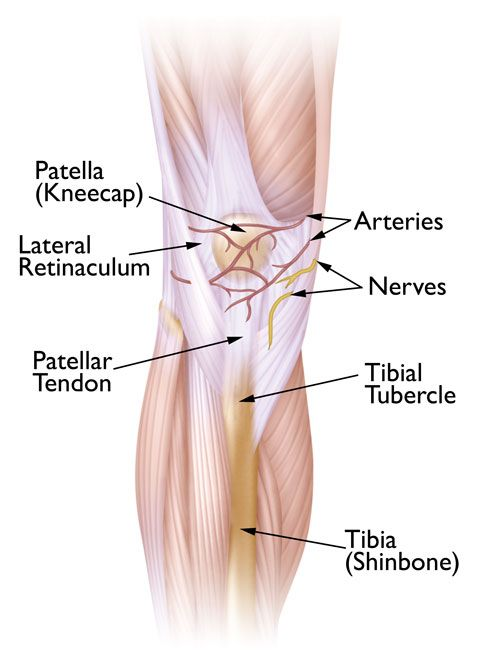 Patellofemoral pain syndrome orthoinfo aaos exercises for Exterior knee pain