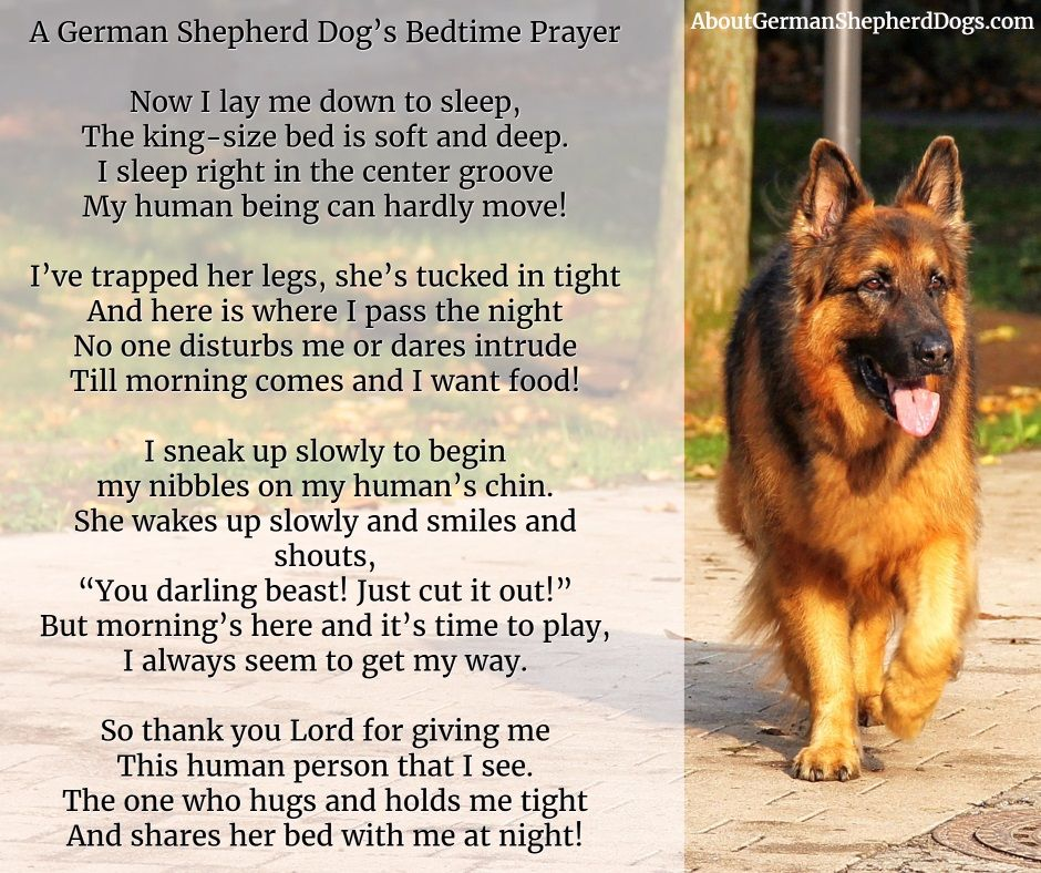 A German Shepherd Dog S Bedtime Prayer With Images German