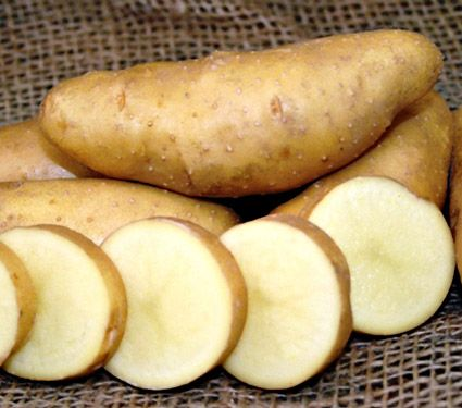 Potato Russian Banana. Very fond of this variety, which I think may be what our Norwegian relatives use.