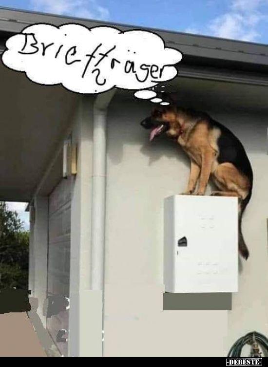Briefträger? | Lustige Bilder, Sprüche, Witze, echt lustig #funnydogs