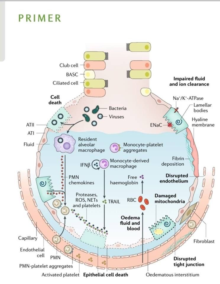 Pin by Andres Sanchez on ICU in 2020 Mitochondria