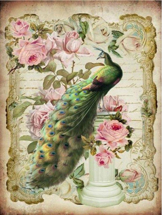 Cognac jacquet peacock original poster bouchet
