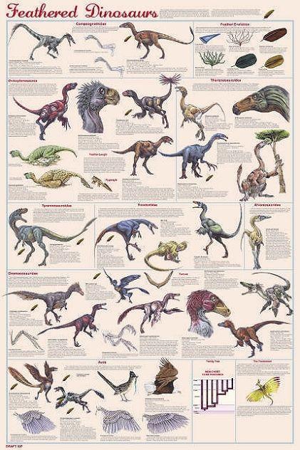 Dinosaures plumes dinosaure dinosaur dinosaurios - Liste des dinosaures carnivores ...