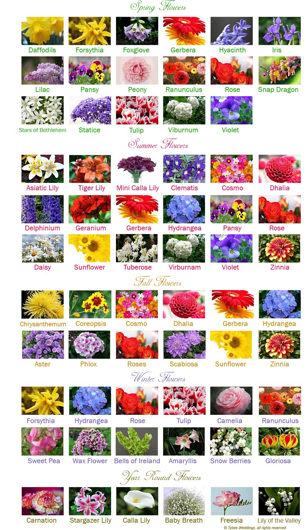 Wedding Flowers by Month Wedding flowers, Types of