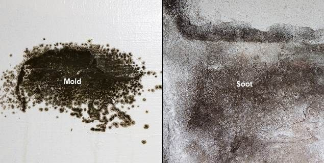 How To Tell The Difference Between Black Soot Mold