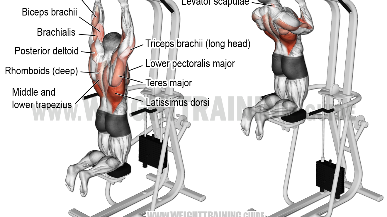 Overhead Barbell Triceps Extension Guide And Video