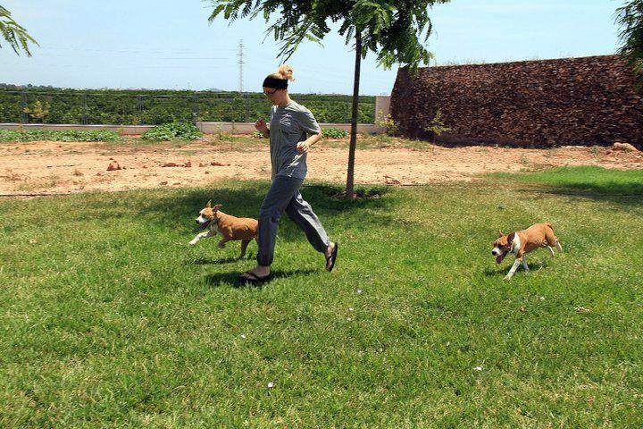 Cachorros en residencia