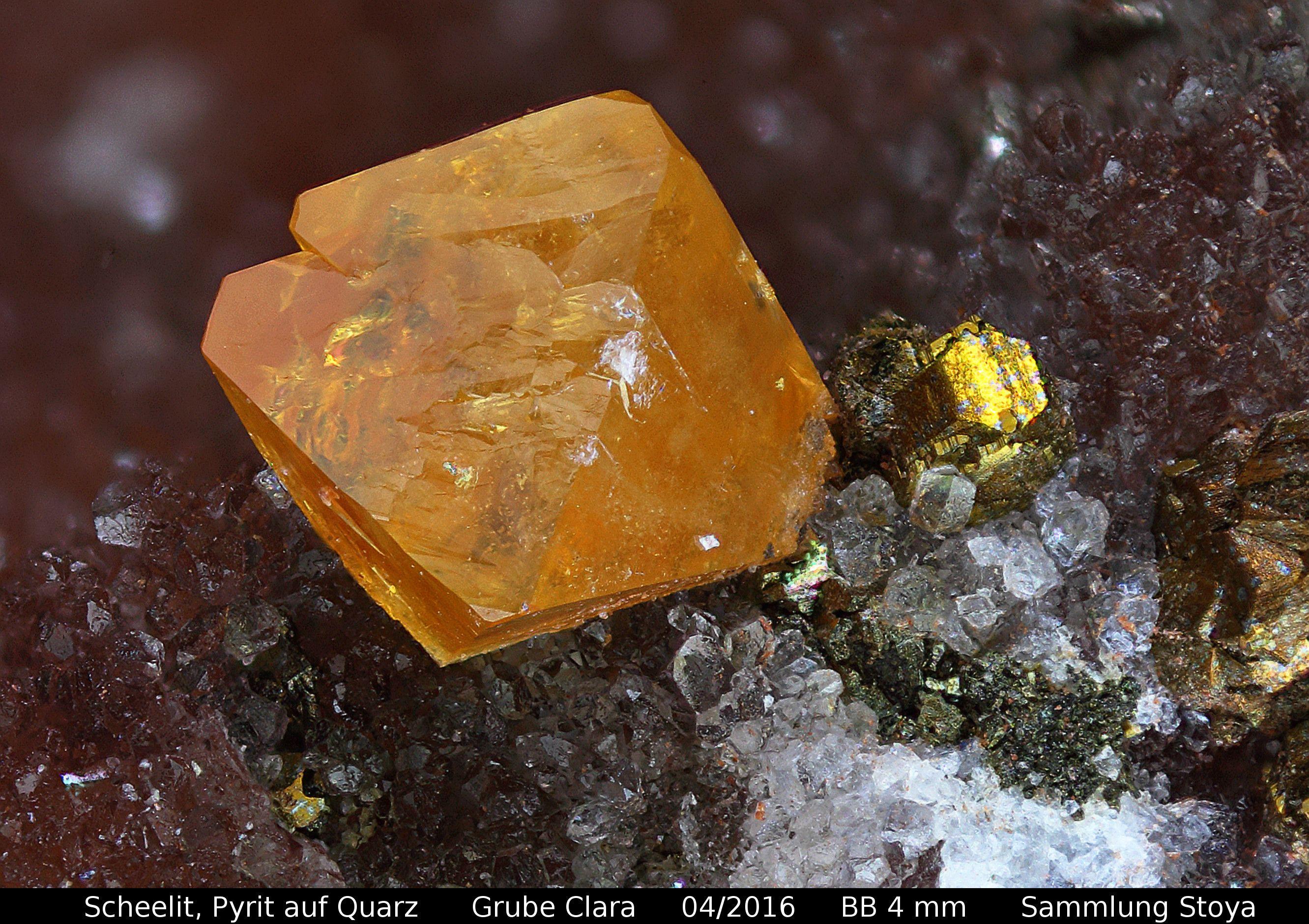 Scheelit,Pyrit auf Quarz  Clara Mine, Rankach valley, Oberwolfach, Wolfach, Black Forest, Baden-Württemberg, Germany Copyright © Stoya