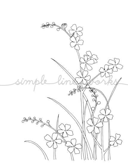Forget Me Not Flowers, Line Drawing, reproduction from original ink