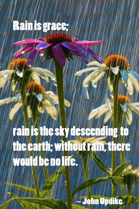 Pin by Dee Hatter on Rainy Days | Rain photography, Summer