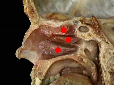 Can you identify this week\'s #MysteryAnatomy structure(s)? #anatomy ...