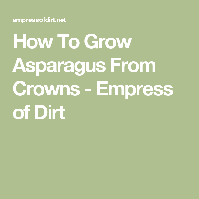How To Grow Asparagus From Crowns - Empress of Dirt