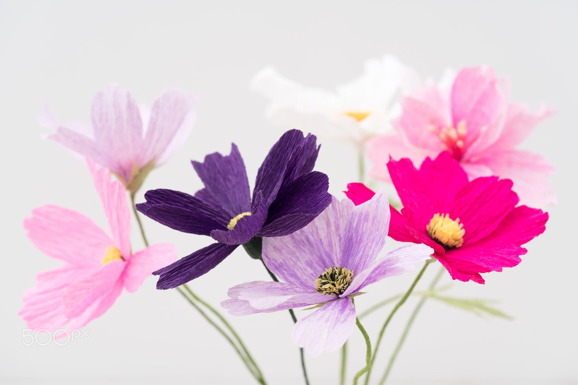 Crepe paper cosmos flower bouquet on white | 18.03.18 | Pinterest ...