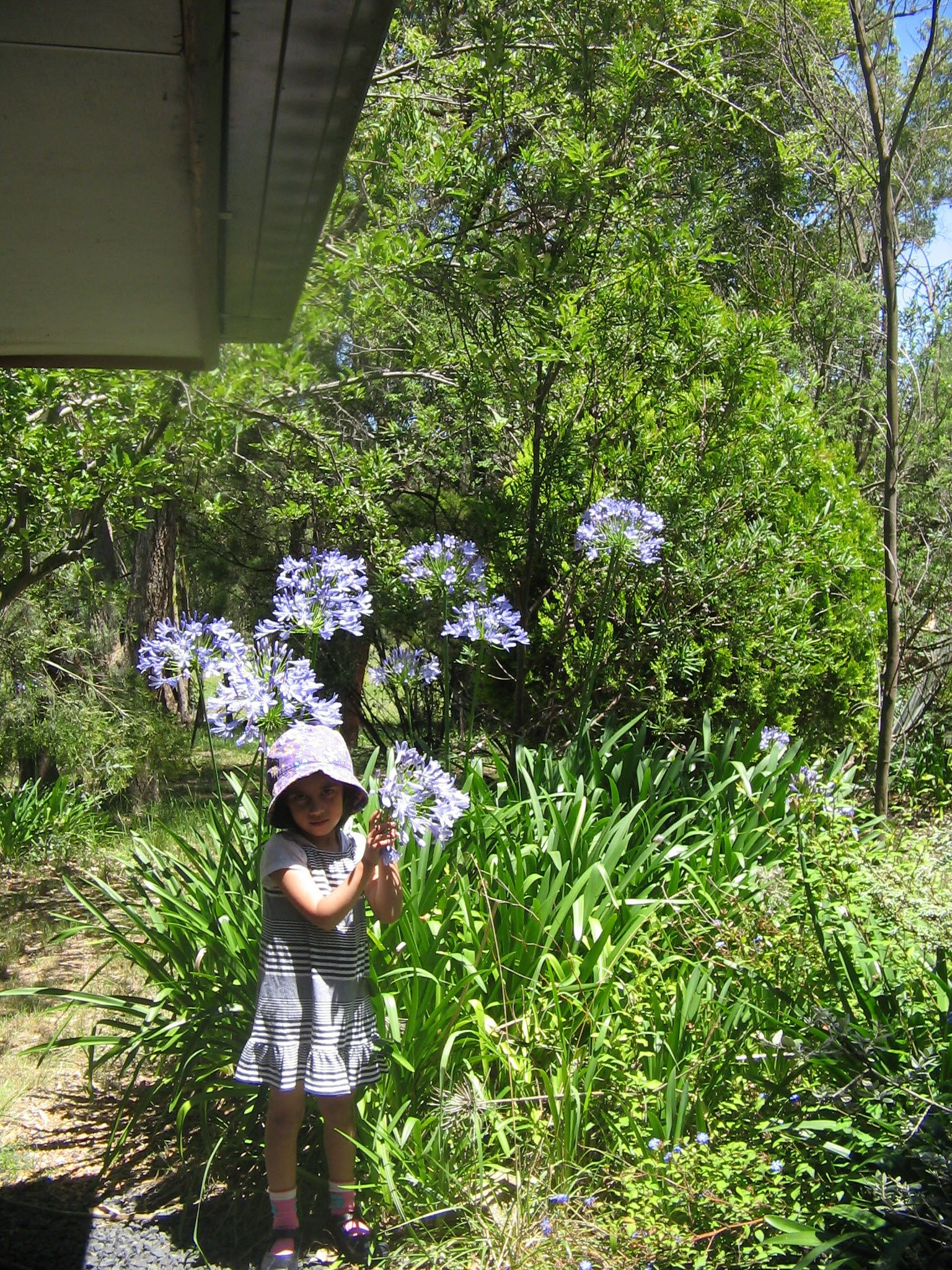 Teaching Tall Taller And Tallest In The Garden