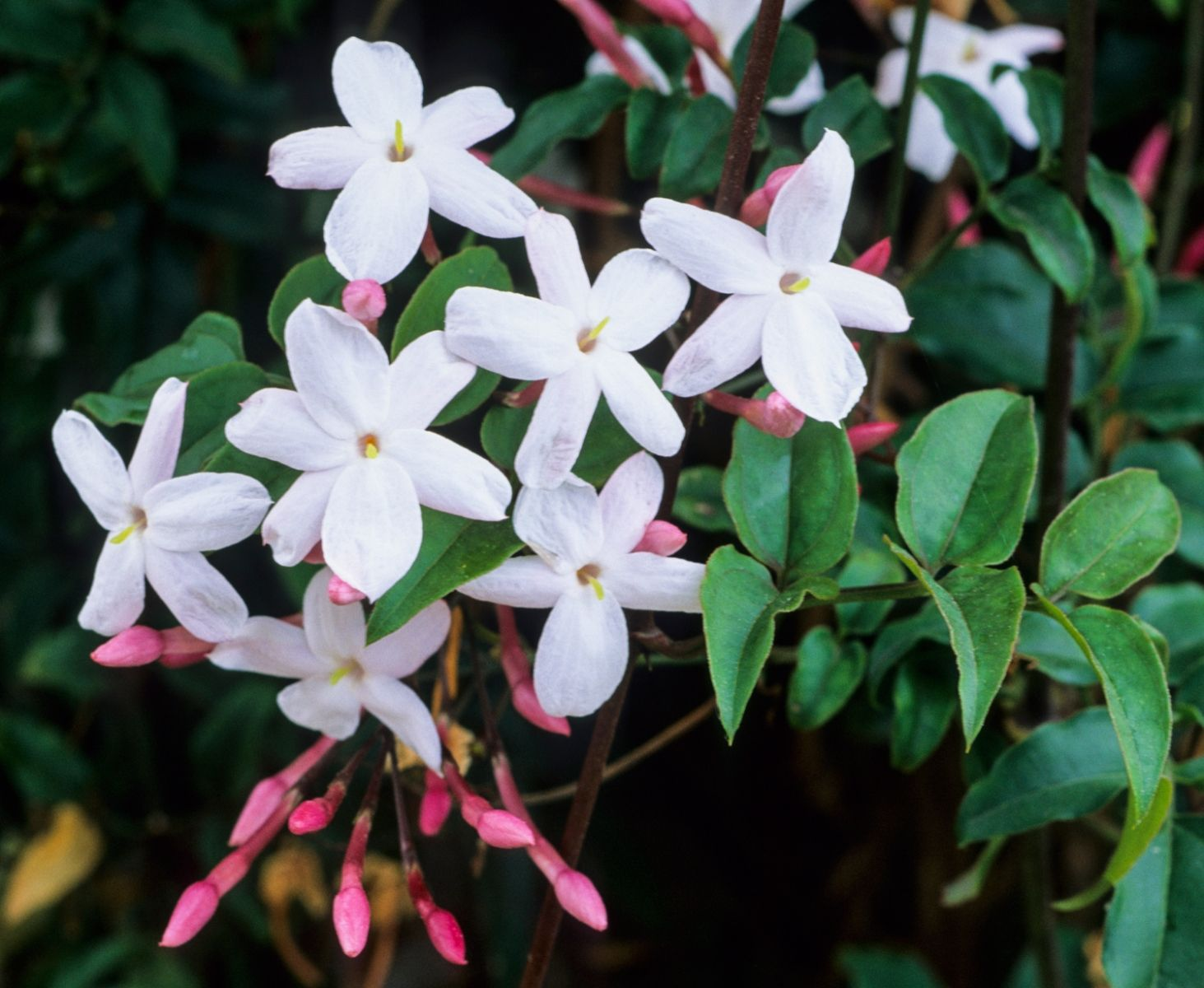 Try These Fragrant Flowers For Your Indoor Winter Garden