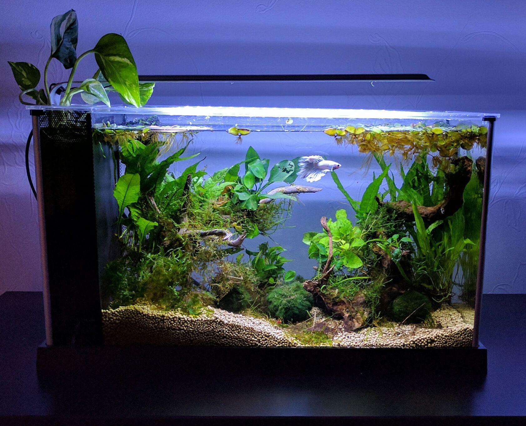 Fluval spec v   Tropical fish aquarium, Fish tank themes ...