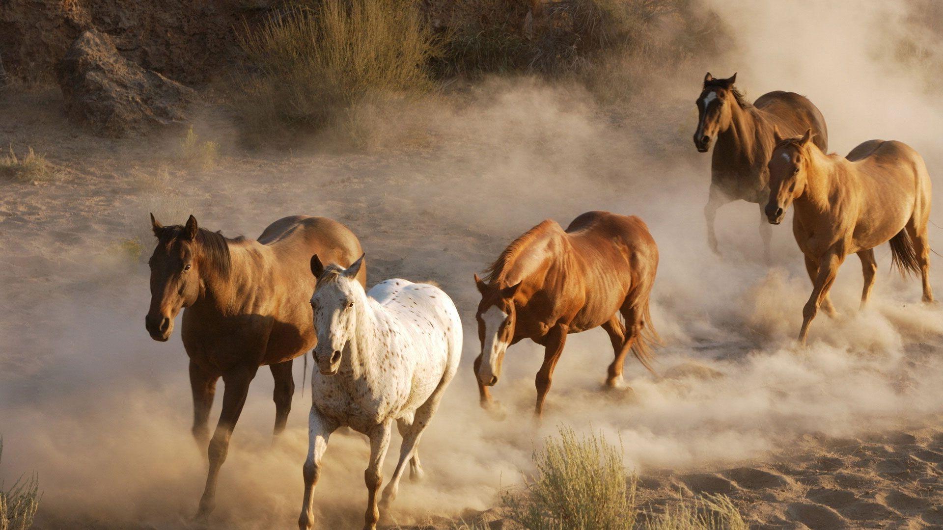 Скачать бесплатно широкоформатные обои Пять лошадей ...