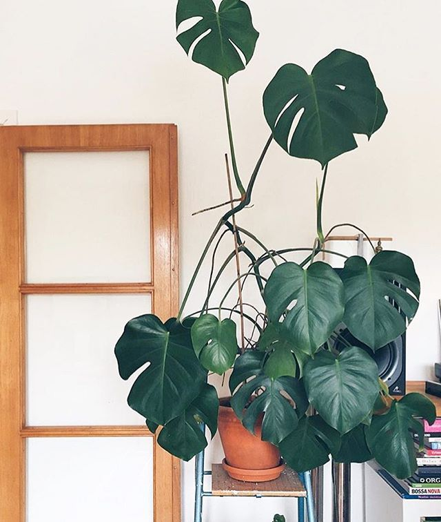 WEBSTA @ homebrewsandhouseplants - Can see the 5'oclock light. .@thehiddenadventure ❤️ #homebrewsandhouseplants