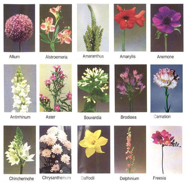 pictures of flower names - Google Search | FLOWER POSTS ...