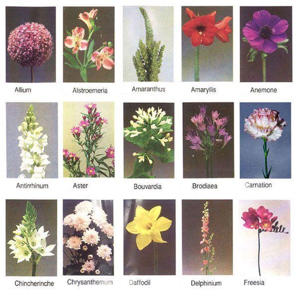 garden flowers names - pyihome