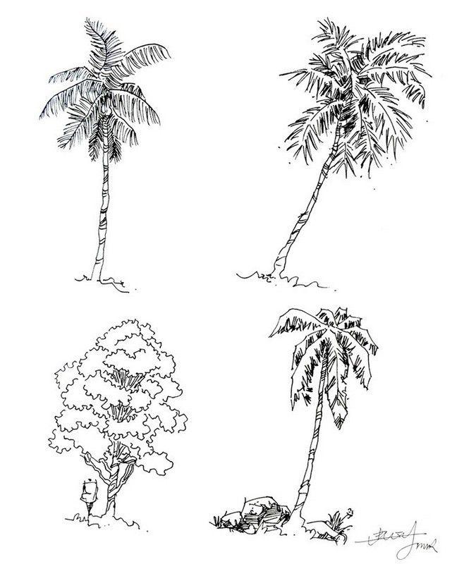 应该是椰子...来自十里only的图片分享-堆糖网