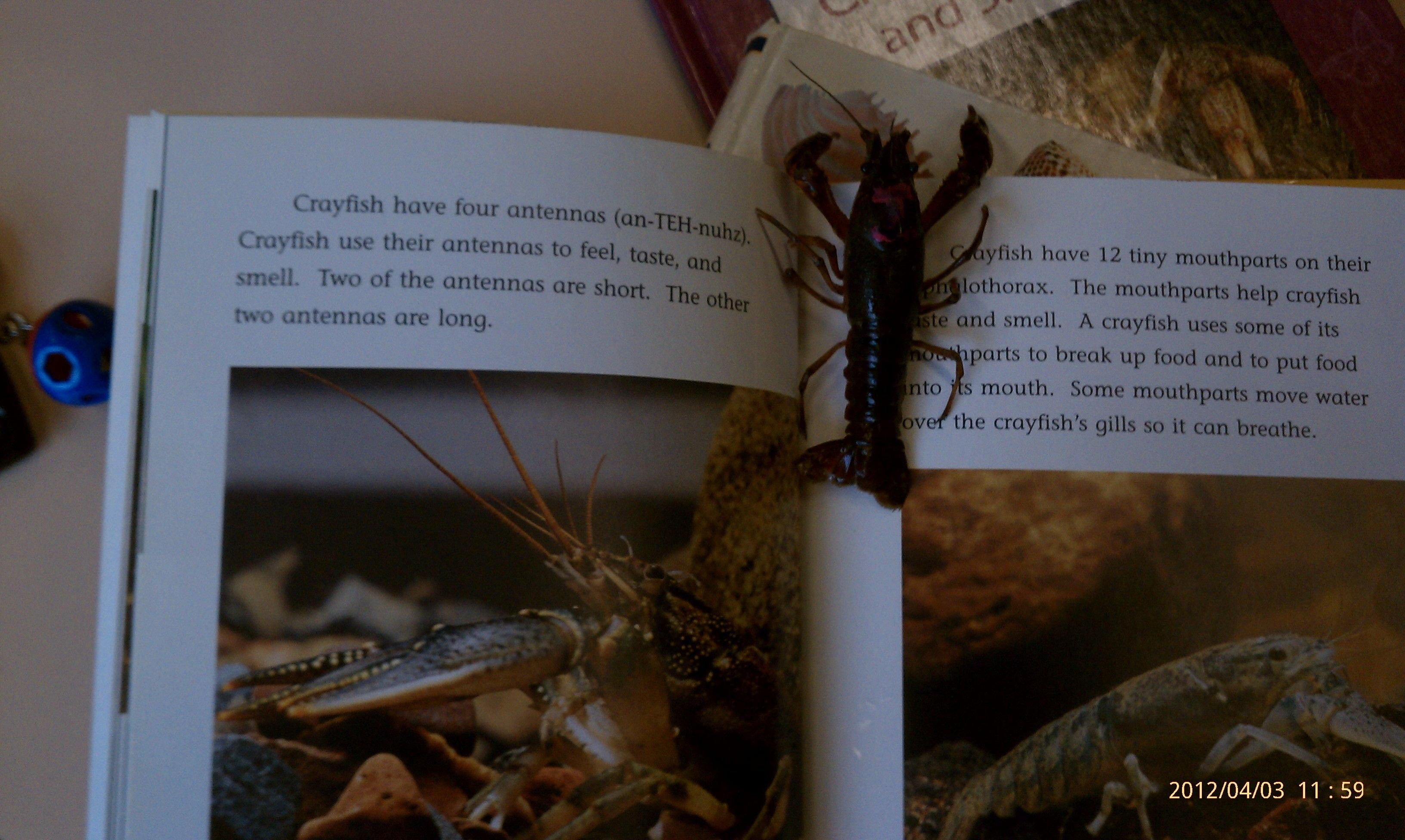 Crayfish books are great!