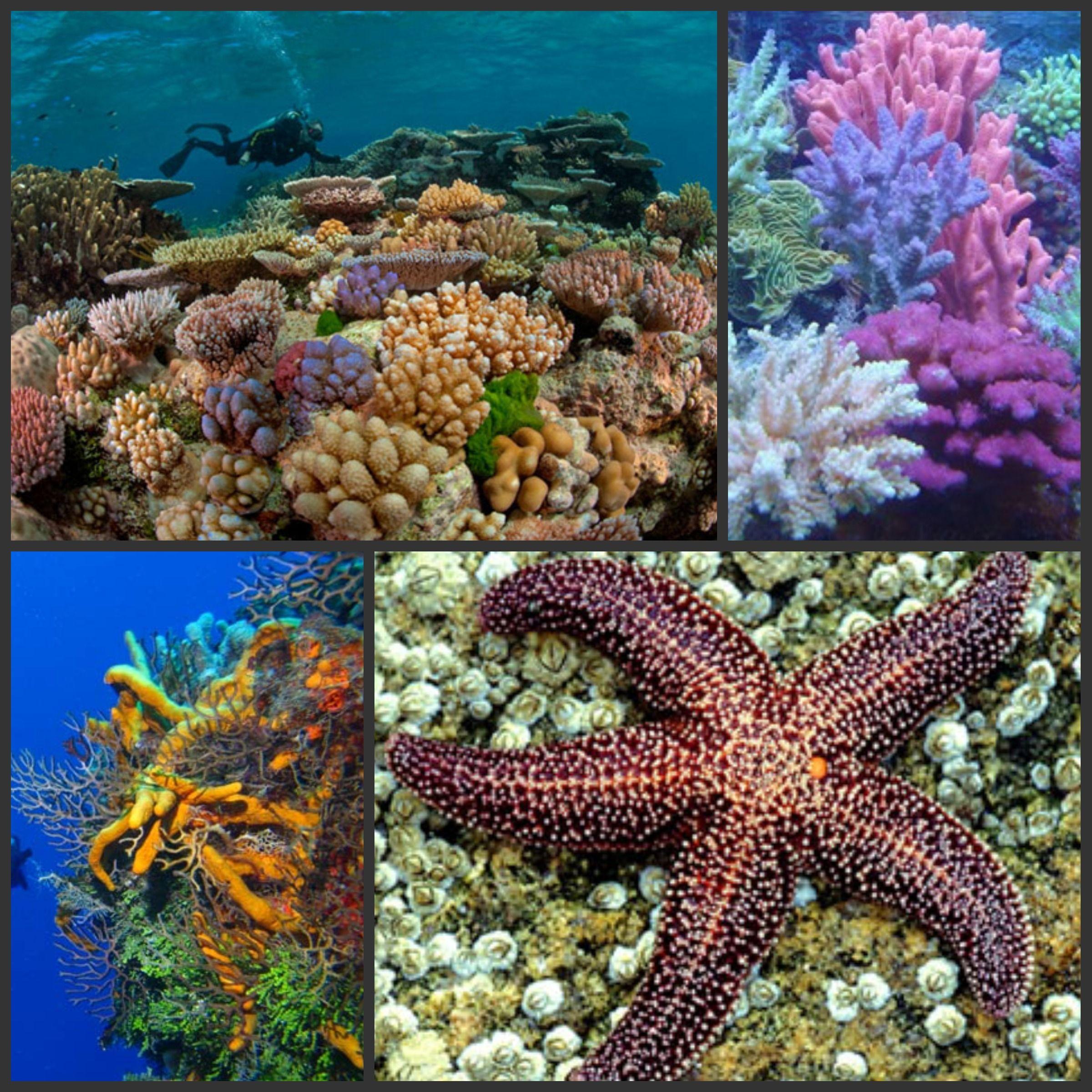 Coral Reefs 2 400 2 400 Pixels