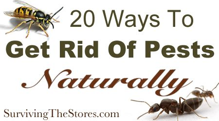 how to naturally get rid of pests with no harmful chemicals life hacks pinterest ordnung. Black Bedroom Furniture Sets. Home Design Ideas