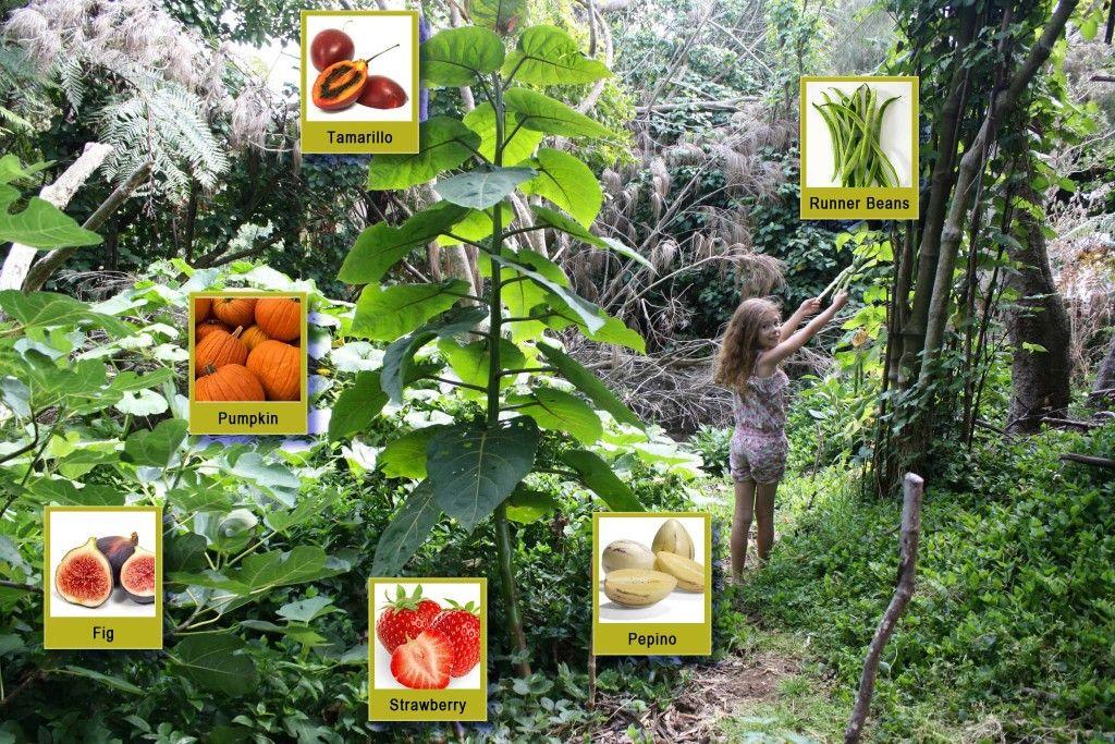 """Résultat de recherche d'images pour """"jardin forêt"""""""