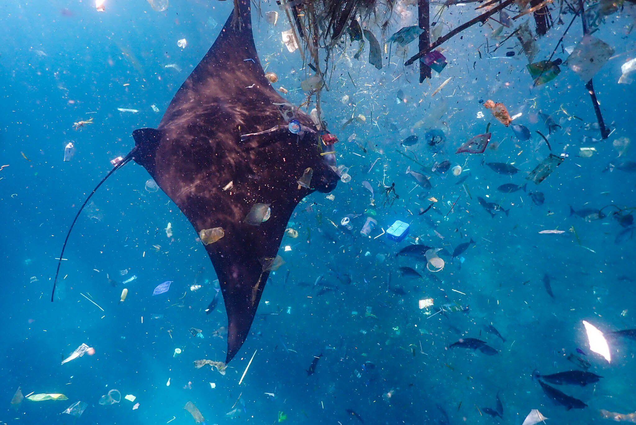 Manta Ray swimming through trash by Oceanic Brooke on Creative Market trash
