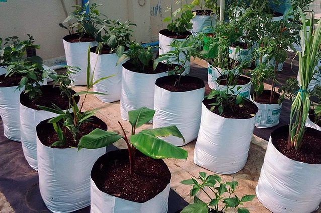 Why You Should Use Grow Bags In Your Garden Grow Bags 400 x 300