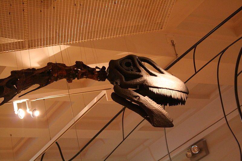 File:Rutland Cetiosaurus.jpg