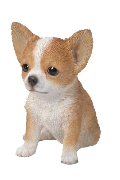 Brown And White Chihuahua Puppy Statue Is An Adorable Life Like Replica Of  Theu2026