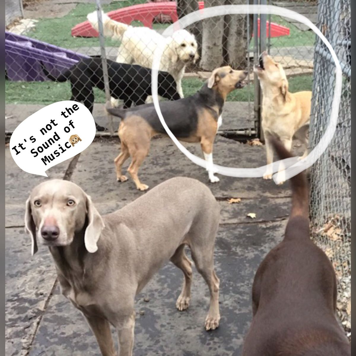 When Your Friends Are Having A Little Too Much Fun Gottalovedogs Dogsong Dogantics Doggiedaycare Funwithdogs Blocky In 2020 Dog Daycare Funny Meme Quotes Doggy