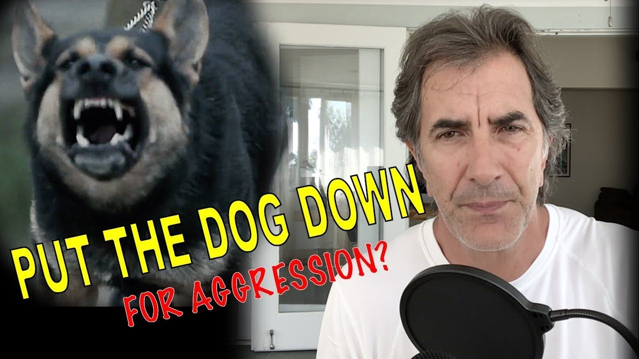 When To Put A Dog Down For Aggression Reactive Dog Training